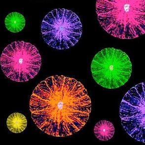 Citrus Fireworks