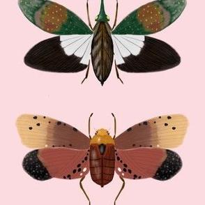 Latern bugs