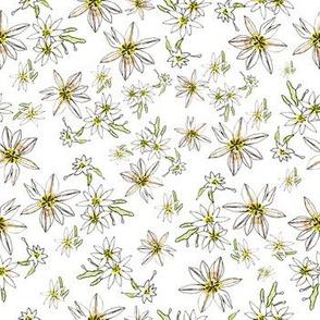 Paula's Wildflowers