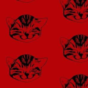 kitty medium red black