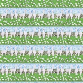 alpacas and dandelion stripes