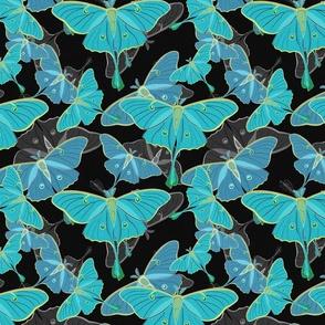 Moths Opalescent