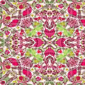 kaleidoscope pink Poinsettia