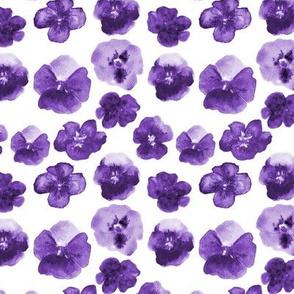 Violet violets • watercolor flowers