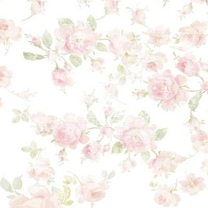 Saint Colette June Roses white aged and faded