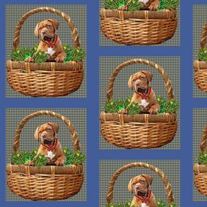 Mastiff in Basket Frame