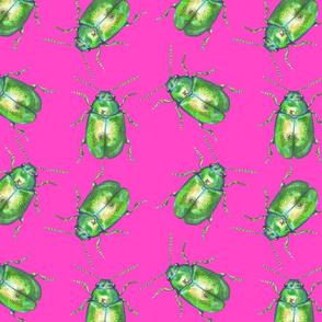 Shocking Dock Beetles