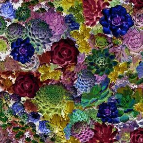 Jewel Tone Succulents