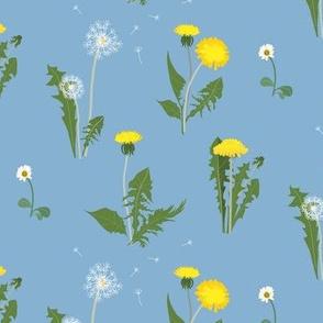 dandelion garden - morning