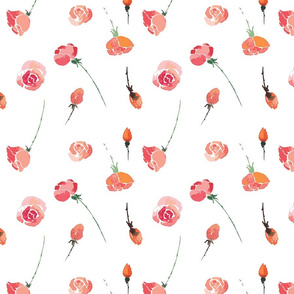 Roses on white