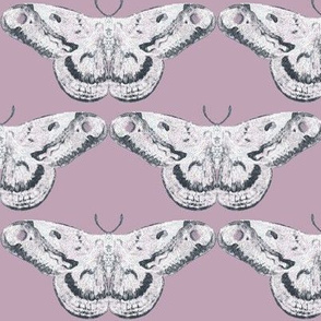 Mauve & White Mystic Moth