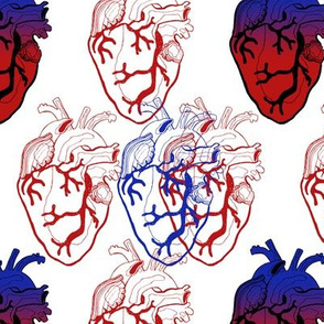 Anatomical Blue and Red Hearts