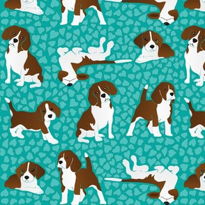 Beagle dog breed - turquoise