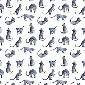 Cats on white