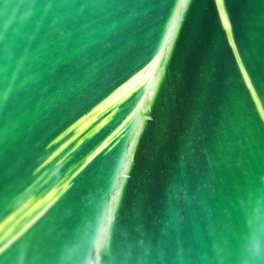 Modern Leaf Tiles