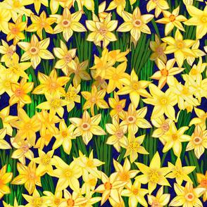 Daffodils Garden Bed