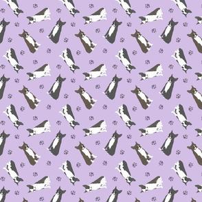 Tiny Boston terriers - purple