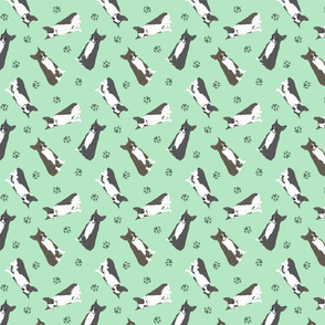 Tiny Boston terriers - green