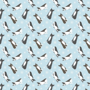 Tiny Boston terriers - winter snowflakes