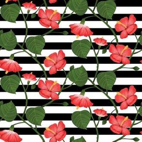 Flor de Maga - Stripes