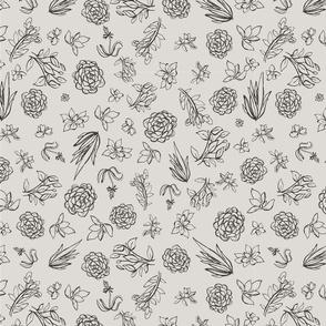 Succulents desert bloom sketches_desert bloom