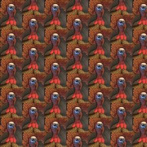 Turkeys large pattern
