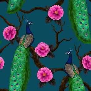 Peacock birds in the camellia garden on blue