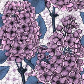 Violet lilacs