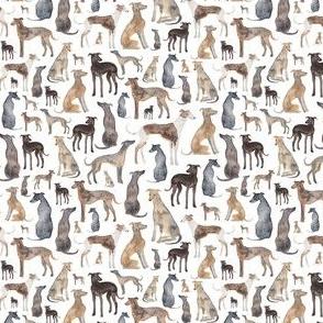Sighthounds (smaller)
