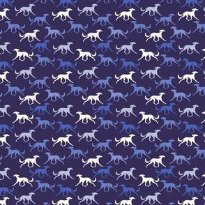 Blue salukis
