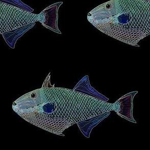 Redtail Triggerfish edges