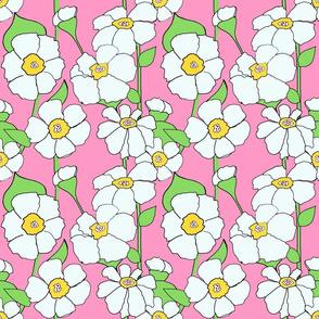 Bubblegum Pink daisies