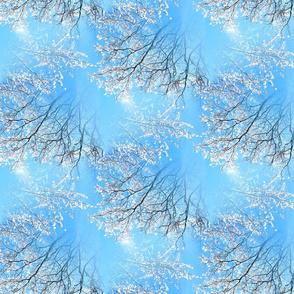 Snowy trees in winter blue sky - Arbres enneigés dans un ciel bleu d'hiver