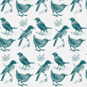 Toile de Jouy Birds Teal on Gray