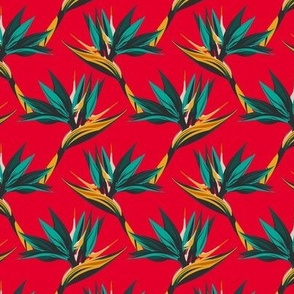 Bird of Paradise- red-small