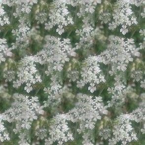 seamlesswhite flowers, abstract