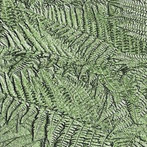Ferns By KABFA