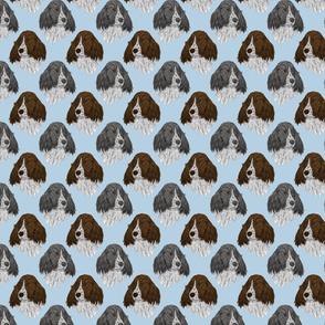 English Springer Spaniel faces - blue