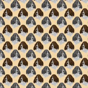 English Springer Spaniel faces - tan