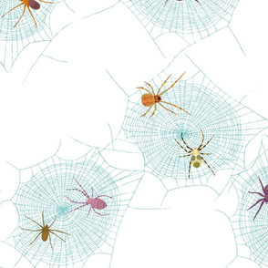 Colorful Spiders on Webs