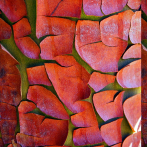 Pacific Madrone Bark