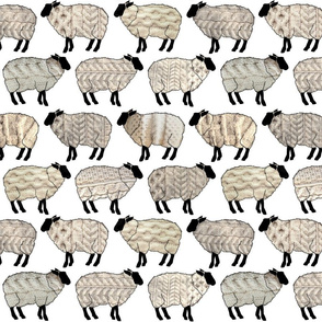 Wee Wooly Sheep in Aran Sweaters (white background)