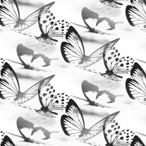 butterflies black and white - papillons noir et blanc
