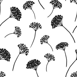 Sedum Flowers Med