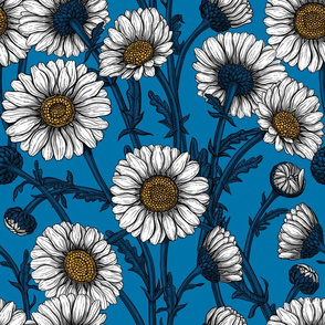 Daisies on blue, big size