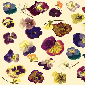 pansies on vanilla