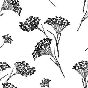 Medium Painted Winter Sedum Flowers