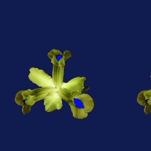 Golden Blue Iris Flower Heads By KABFA Designs