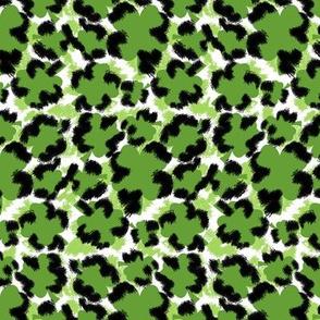 Leopard Clovers