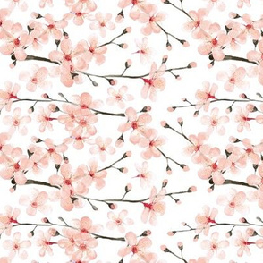 blush pink cherryblossom on white